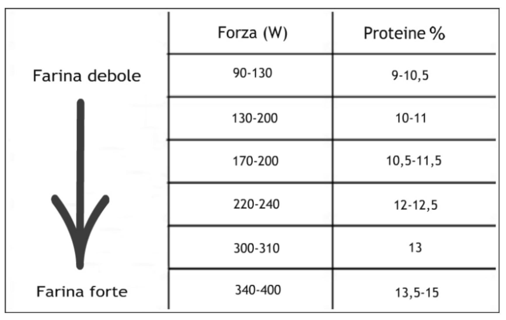 Forza e proteine delle farine di grano tenero