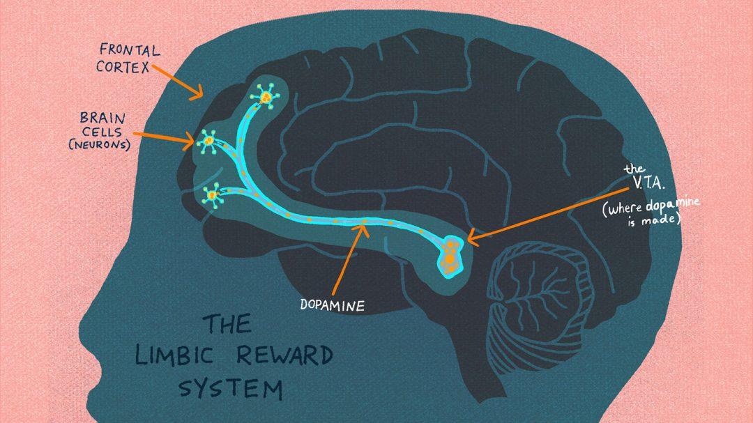 Cervello e oppiodi endogeni